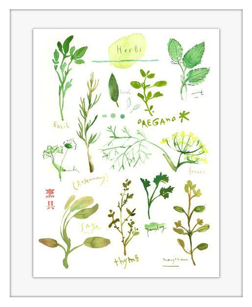 Watercolor herbs illustration  11X14 botanical by lucileskitchen, $45.00