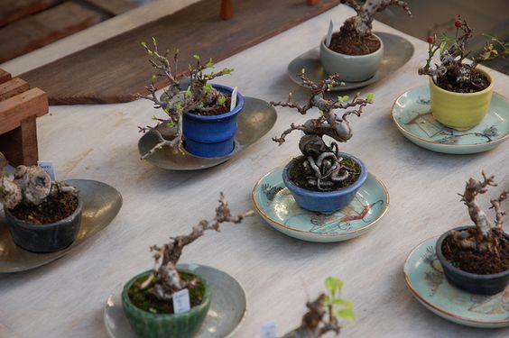 """小矮盆盆栽被称为""""盆栽""""(日文""""豆盆栽"""")。"""