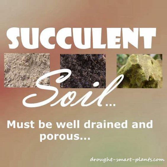 正确的多汁土壤是种植多汁植物最重要的部分;如果他们没有良好的排水,他们就不会幸福;大多数多汁的植物,如贫瘠的土壤......