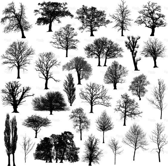 三十个不同,详细和美丽的冬天树剪影。