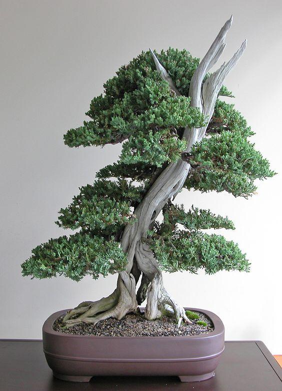 Juniper Bonsai Gallery。我真的很喜欢盆景树的外观。请查看我的网站谢谢。 www.photopix.co.nz