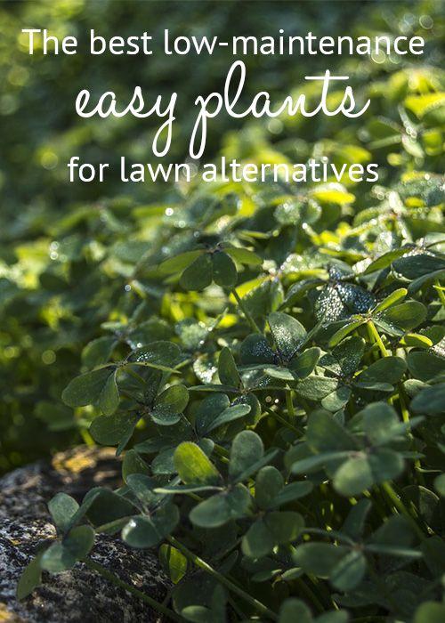 作为草坪替代品的最佳低维护植物!做草地的植物替代了无草草坪