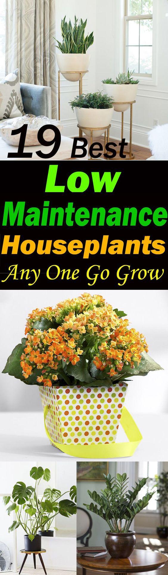 看看这19个最好的低维护室内植物,如果你是在室内种植植物或发现自己懒惰的新手。
