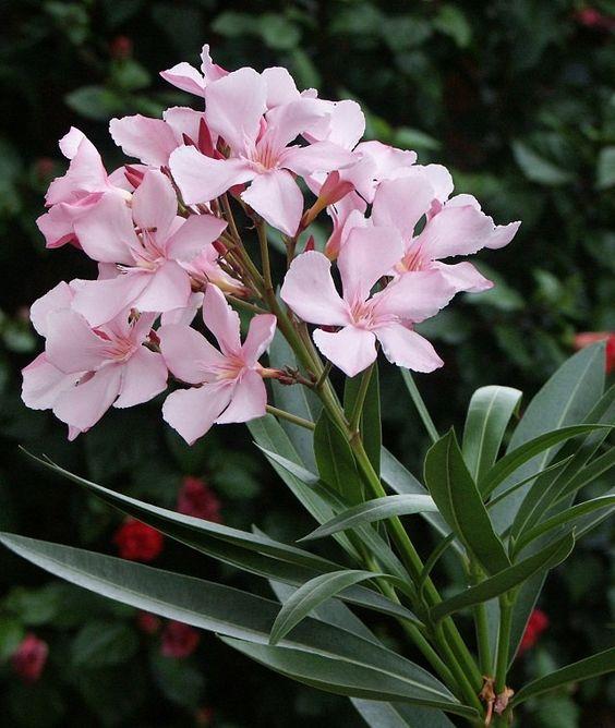 所有植物都需要水来生存。然而,就像需要更多水的植物一样,有些植物在缺水的情况下生长。它们是耐旱性最好的植物,可以长时间不用水。