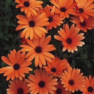 如果您想在阳光充足的地方建造一个集装箱花园,请使用我们的最佳开花容器园林植物清单,以获得完整的阳光照射。