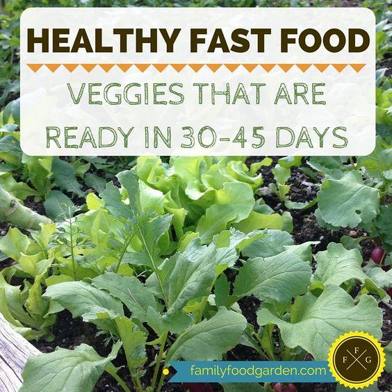 为您的花园快速种植农作物!这些作物准备在45天内收获,非常适合套种。快速生长的作物也容易生长!