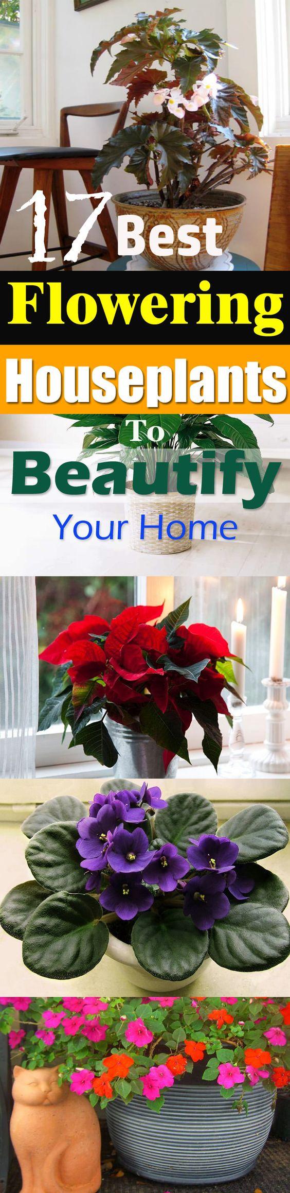看看这个最好的开花室内植物清单!它们可以为您的家增添一抹亮色,与其他室内植物相似。