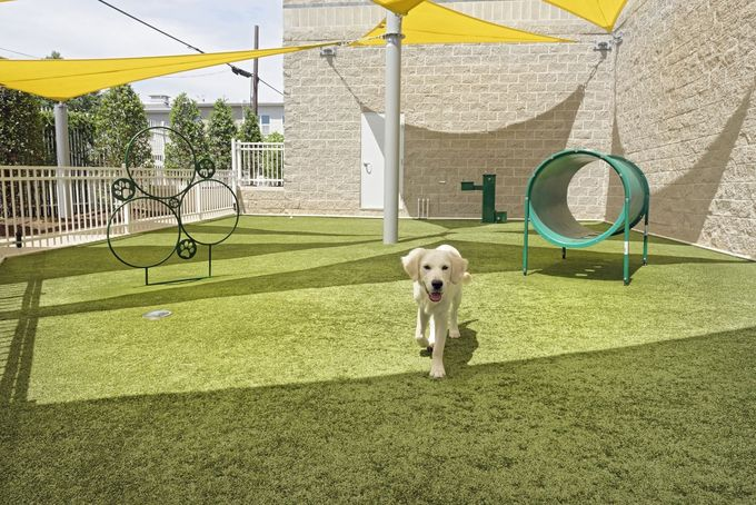 dogparks in rooftop terraces - Google Search