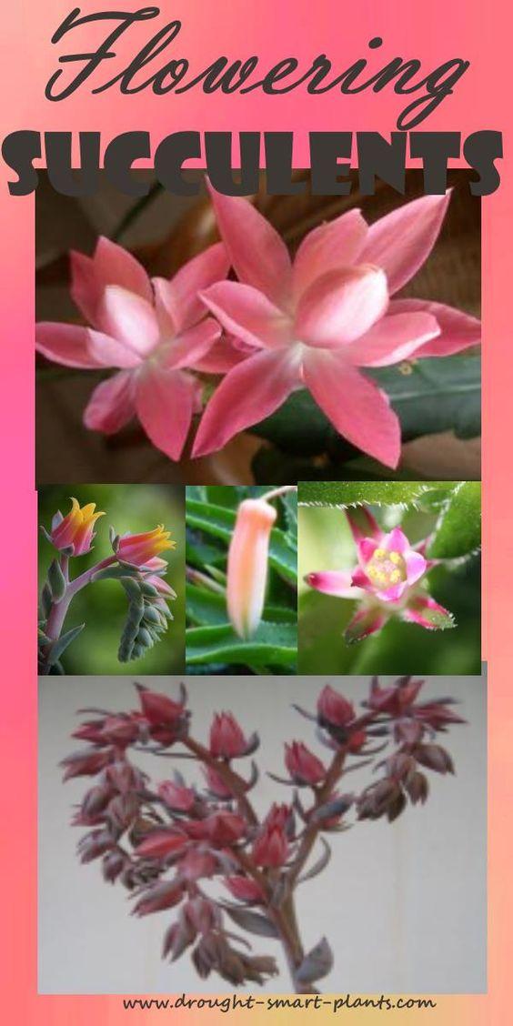 开花的多汁植物;仿佛植物本身的美丽是不够的,多汁植物与花卉除了会敲你的袜子... ...