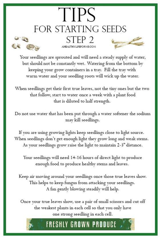 启动种子照顾幼苗的技巧