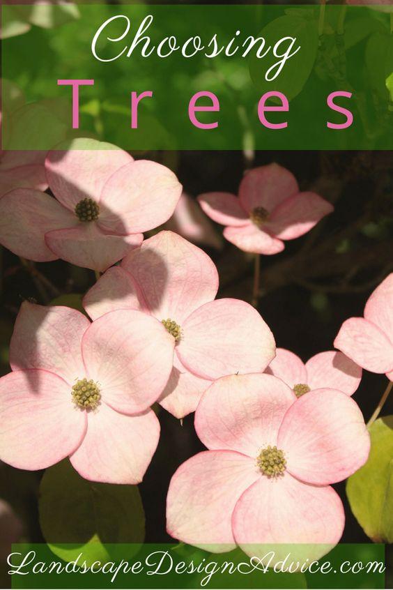 如何在设计中使用景观树木,种类和品种