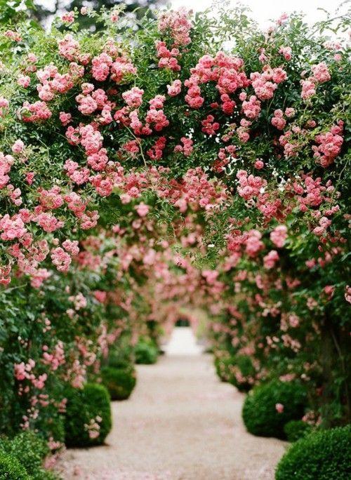 盆栽花园衬在楼梯上