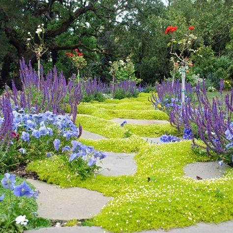 这些低维护的地面覆盖思想意味着减少割草时间,为您节省更多时间。选择草地上的三叶草地面覆盖选项也可节省水资源。