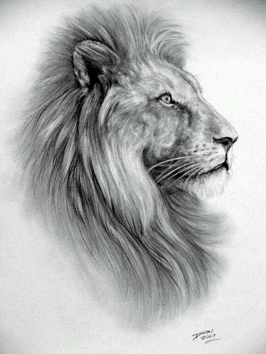 a lion is one of god most amazing creatures he ever created.