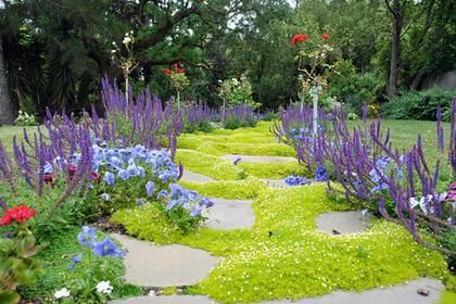 这些低维护地面覆盖的想法意味着更少的割草和更多的时间。选择像草地上的三叶草地面覆盖物这样的选项也可以节约用水。