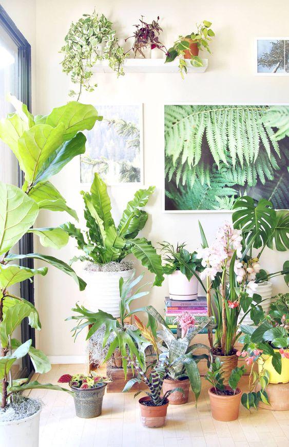 18个最美丽的室内植物,证明在我们可爱的室内花园中生长容易!有关如何种植健康家居植物的5个重要提示的详细指南!使这些华丽的叶子和开花植物在低光照条件下茁壮成长,让您的家变得更加美丽。