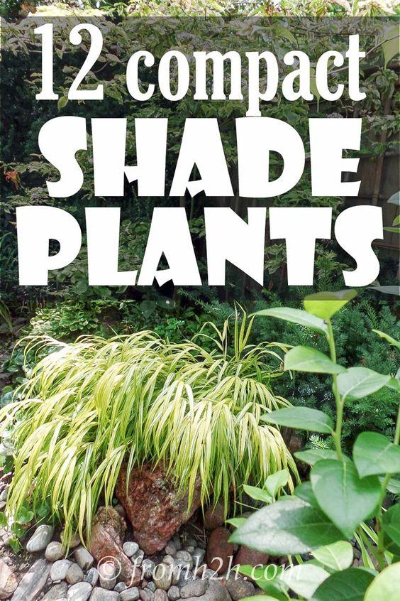 这些美丽的紧凑型遮阳植物可用作多年生地面覆盖物,这将增加您的花园的兴趣,同时帮助保持杂草下降。