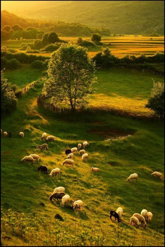 Sheep's paradise - by notreparis - Pixdaus