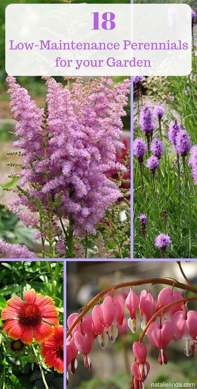 低维护多年生植物非常适合装饰您的花园。它们需要很少的维护,并且可以长大多年。这里列出了18个华丽的多年生植物!