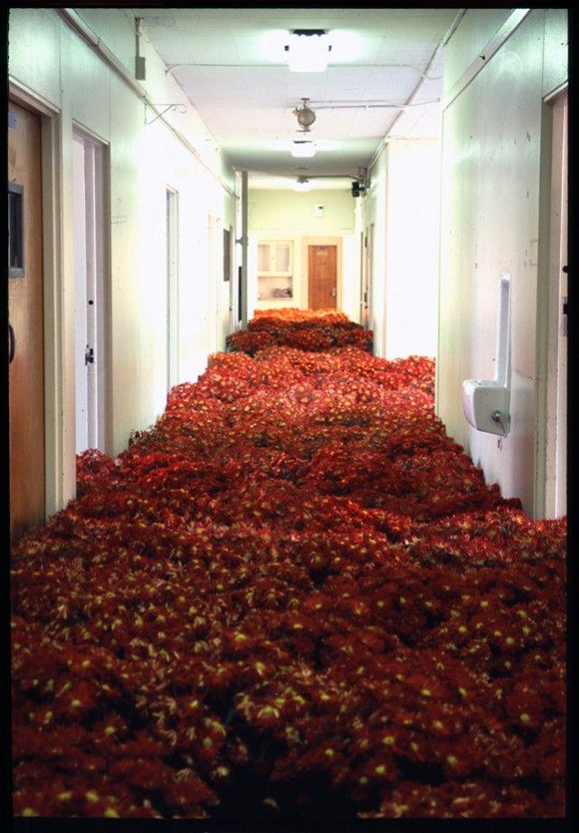 绽放:马萨诸塞州精神卫生中心安装了28,000盆花