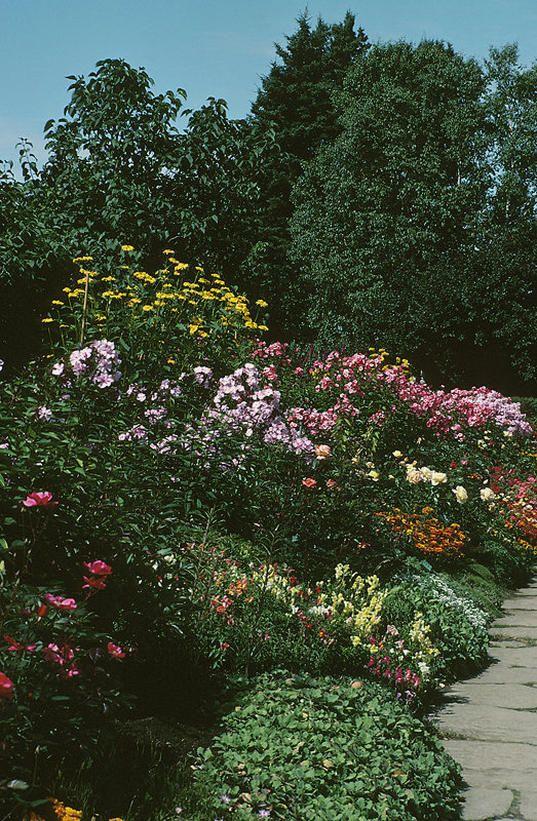 了解如何使用快速增长的植物来解决美化问题。