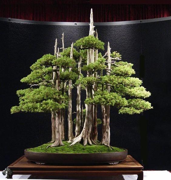 """我们的十大最美丽的盆景树。虽然""""盆景""""是世界各地许多人的爱好,但它的亚洲起源仍然很明显。"""