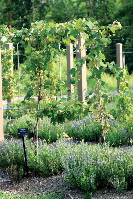 Beautiful Enough to Eat: Edible Landscaping