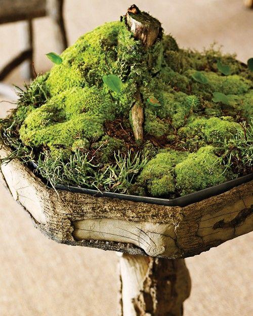 郁郁葱葱的苔藓花园从大自然中借来,放置在盆中,就像迷你森林。