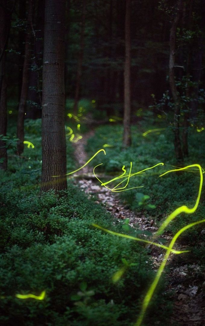 Using a slow shutter speed, photographer and physicist Kristian Cvecek captures incredible firefly trails like you've never seen.