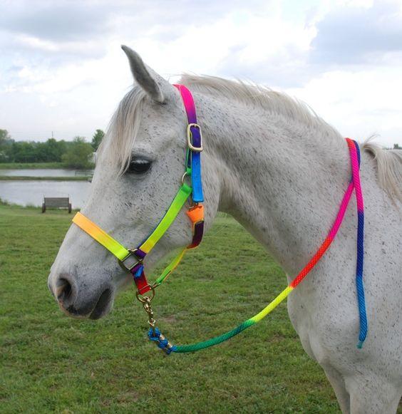 彩虹色的头箍和铅绳