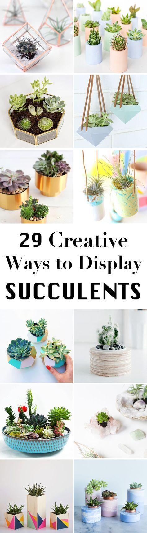 多汁植物非常适合装饰你的家。这里有29种可爱而轻松的DIY多汁植物的想法。学习如何展示你的植物!