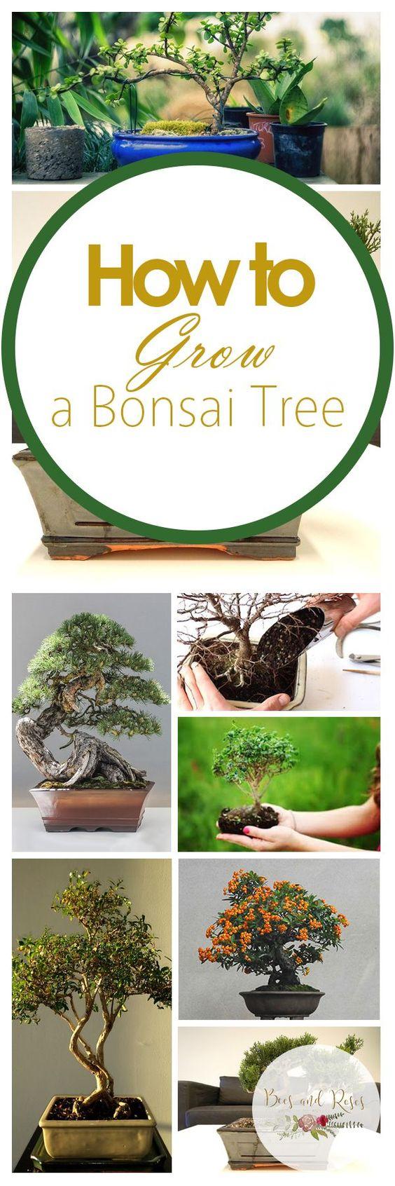 学习用我简单(和简单)的室内园艺指南种植盆景树。照顾盆景树是一个棘手的过程,用它来帮助!