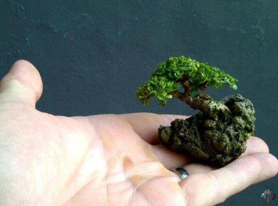 盆景以小尺寸而闻名,但树木小型化的努力有时会走向极端。