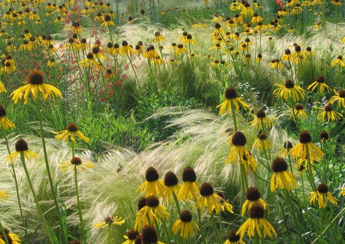[echinacea and grasses] ... Great simplicity with incredible texture