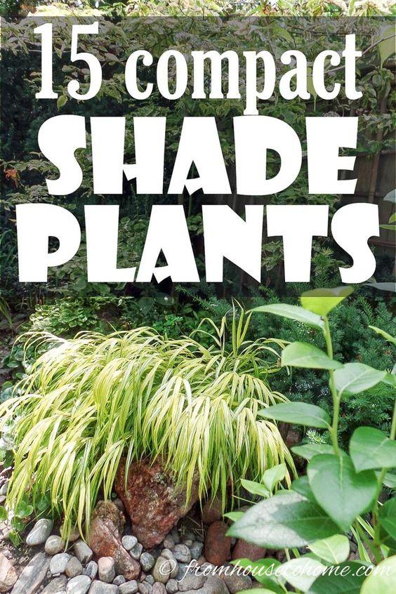 这些美丽的紧凑型遮荫植物可以用作多年生地面覆盖物,这将增加您的花园的兴趣,同时帮助保持杂草的下降。