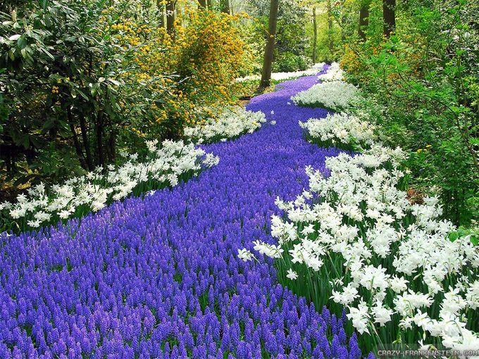 Netherlands flower park