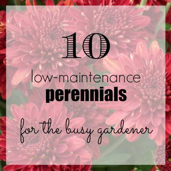为繁忙的园丁提供10个低维护的多年生植物!您仍然可以拥有美丽的花坛,而无需花费大量时间来维护它们。