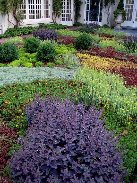 低增长的景天,百里香和其他地被植物可以替代草地。