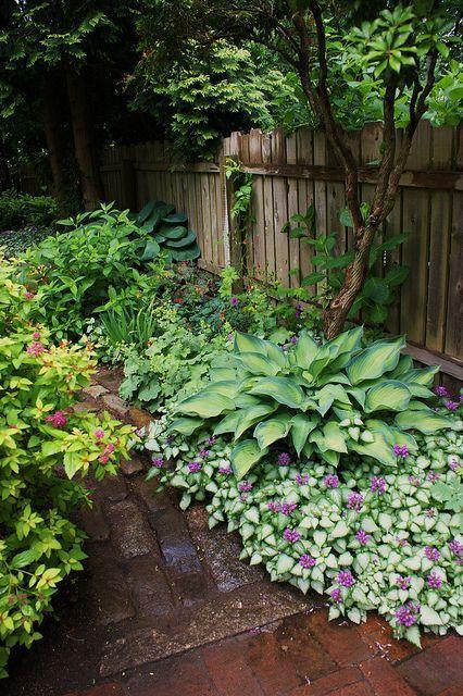 后院遮荫园林植物... Lamium,Hosta  -  Lamium是一个惊人的地面覆盖,可以在一个或两个季节填充床 - 粉红色或紫色的花朵
