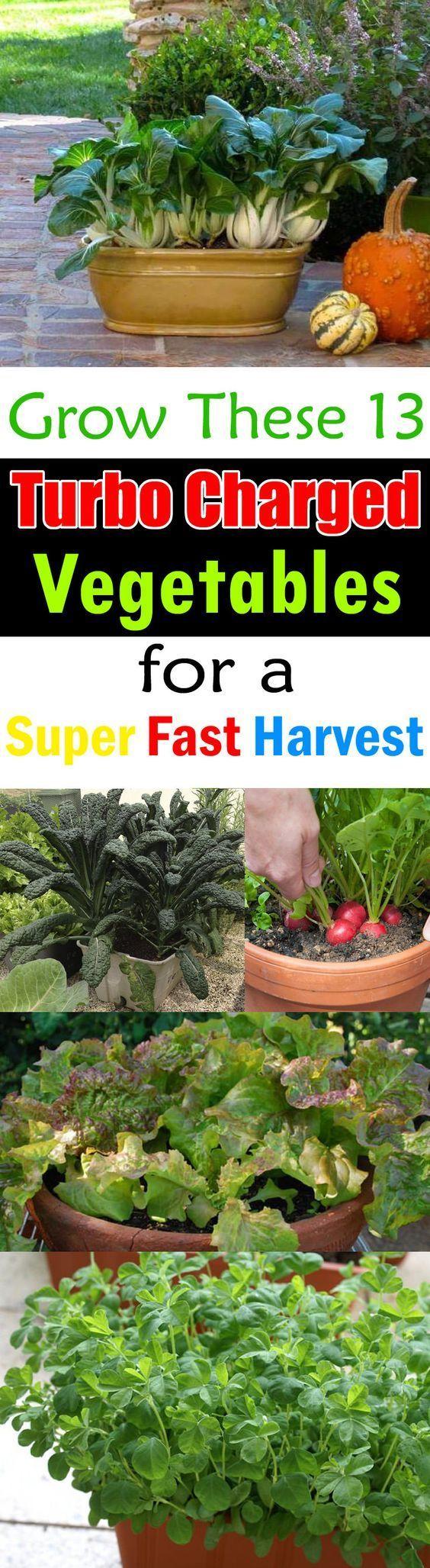 如果你在种植蔬菜时不耐心 - 必须看到这份快速种植蔬菜清单。大多数快速增长的容器蔬菜可以在2个月内收获甚至更快。