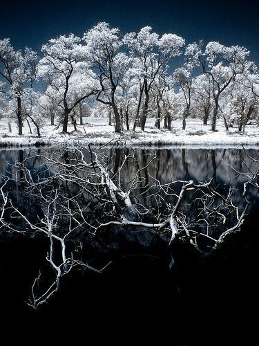 40 Incredible Near-Infrared Photos | Smashing Magazine