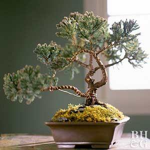 在古老技术风格的小树上展现出更大自然世界的内在美。通过2016年Mini Gardens&Terrariums杂志的教程,学习如何通过三个简单步骤种植盆景树。
