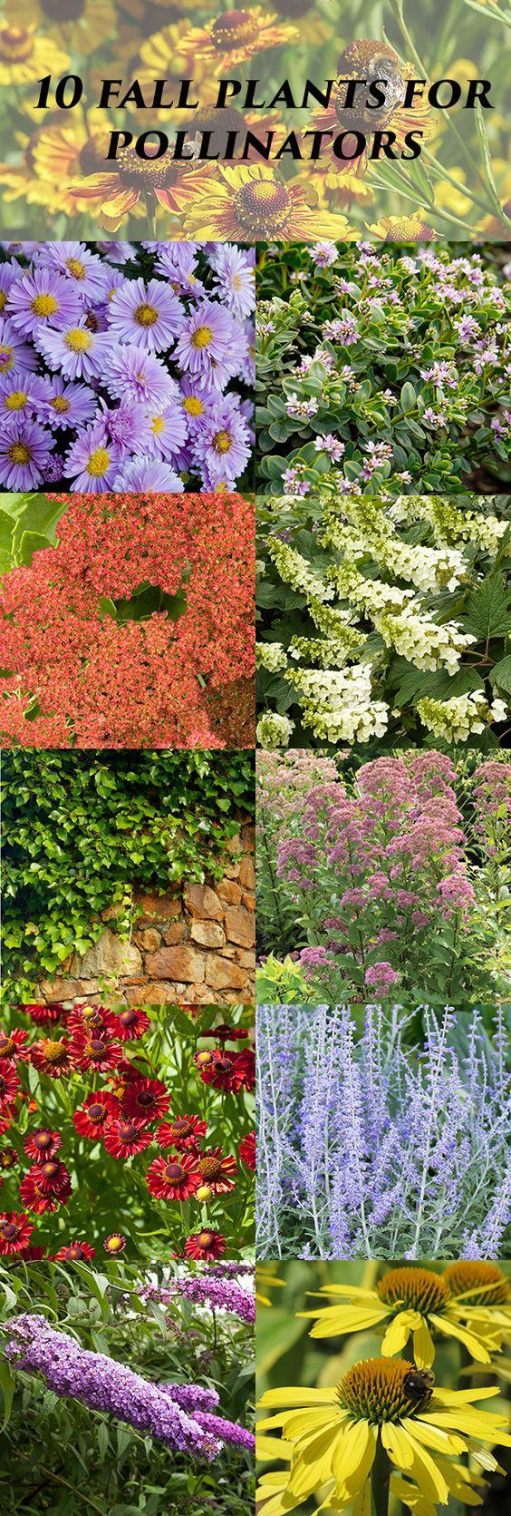 许多植物已经在夏末完成了开花,但蜜蜂,蝴蝶,飞蛾,黄蜂和灰飞虱仍然在翅膀上,觅食。就在这时候
