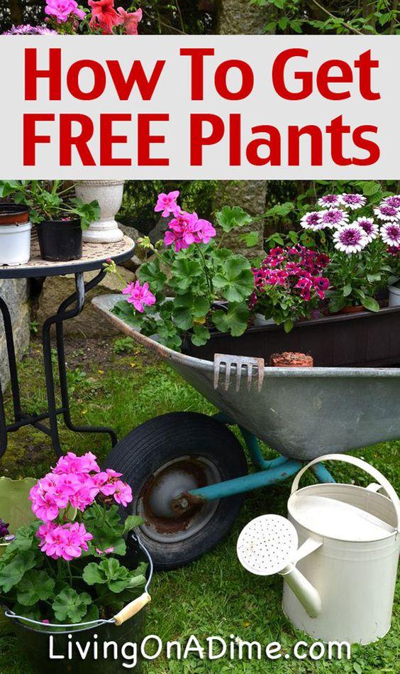 园艺是一个有趣的爱好,清爽可以很容易廉价。这里有一些简单的方法可以为您的花园提供免费的植物和种子!