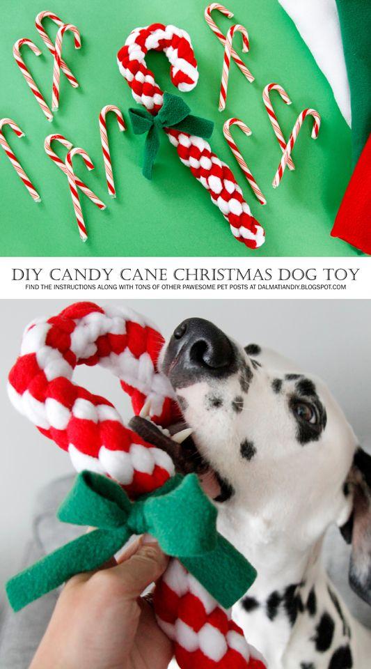 卡路里免费糖果手杖编织摇粒绒DIY狗狗拖轮玩具乐趣!为什么不和一些节日游戏时间共同度假呢?这款糖果手杖拖轮玩具是用扭曲的盒子结编织而成,它创造了漂亮的斜条带以及一个偷偷摸摸的隐藏式额外带来创造它的经典糖果手杖曲线。这是如何制作自己的。
