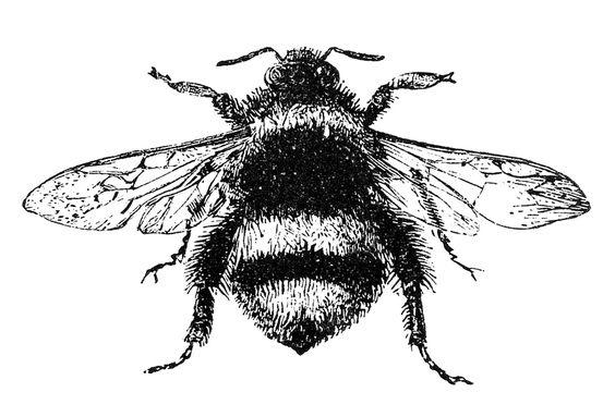 复古黑色和白色大黄蜂的免费股票形象。