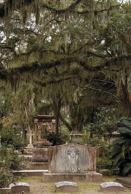 """我们周末前往萨凡纳,我有机会拍了不少照片。如果你从未去过博纳文蒂公墓,那么你错过了。在""""善恶园林""""中的电影""""午夜""""中出名,这座公墓充满了历史和人物。到处都是苔藓活橡树。感觉就像你踏入了另一个维度。必须黑色大看。不是HDR。 3射垂直全垒打。"""