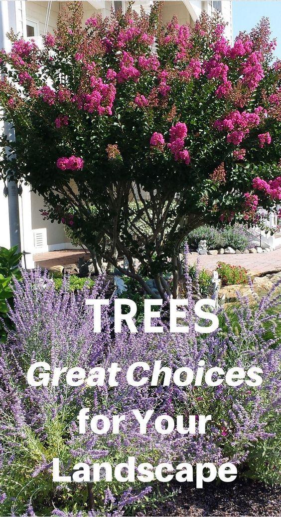 了解如何在景观中成功使用树木