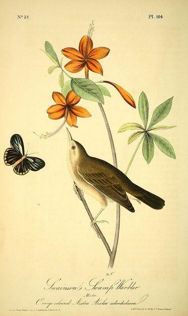 The birds of America :. New York :J.B. Chevalier,1840-1844.. biodiversitylibrary.org/page/40383532