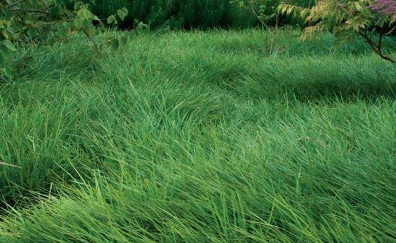 当你在草地上长大后,用大量的地面覆盖物或混合的低种植者替换未使用过的草坪